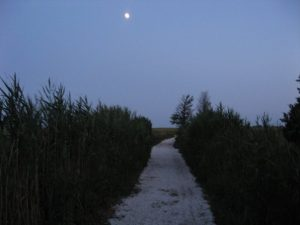 Evening Stroll Under a Full Moon – Sea Pirate Campground