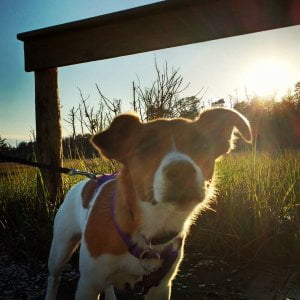 Riley visiting for opening weekend at Sea Pirate Campground           …