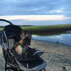 We are a pet friendly NJ campground. Thank you for sharing your vacation with us…