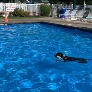 We love our furry guests! Thank you  –  Dog day swimming…