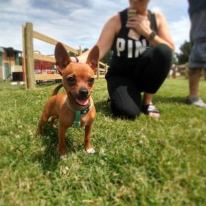 Yes, we are a pet-friendly campground. We feature a dog park for your fur baby t…