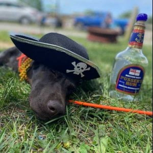 Read more about the article Your furry friend is welcome at Sea Pirate Campground. We all love to have fun w…