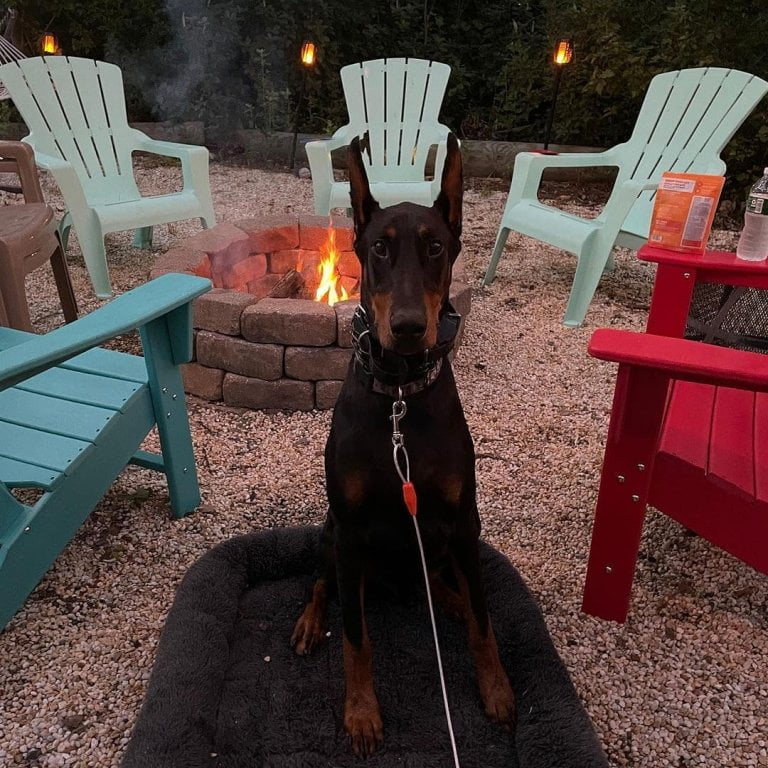 Sharing a campfire with your best friend and family is the best quality time, fo...